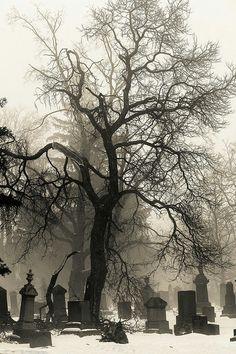 Foggy graveyard in winter
