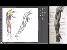 How to Draw Arms | Fantastic Anatomy!