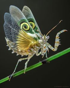 Animals photos & pictures on fotocommunity - Amazing Animals - Cool Insects, Flying Insects, Bugs And Insects, Amazing Animals, Animals Beautiful, Cutest Animals, Weird Creatures, All Gods Creatures, Beautiful Bugs
