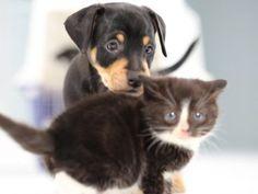 Köpek Bakımı, Köpek Temizliği ve Köpek Nasıl Yıkanır?