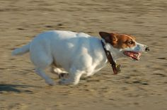 My dog is faster than your dog.