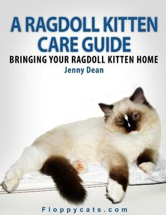 A Ragdoll Kitten Care Guide: Bringing Your Ragdoll Kitten Home - for my parents