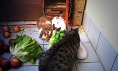 Salad for all bunnies hehe ♡ where is Lucky ~_~   #kaninchen #hasen #zwergkaninchen #katzen #cats #rabbits   http://kaninchenfanlucky-meinkaninchenloch.blogspot.de/2014/04/salad-for-all-bunnies-hehe-where-is.html