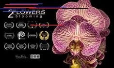 This video brings out the most beautiful aspect of flowers in gorgeous detail and allows us to enjoy one of nature's most beautiful gifts - the blooming of flowers. George Carlin, Time Lapse Photography, Iphone Photography, Echeveria, Number Quotes, Hibiscus Rosa Sinensis, Nature Gif, Nature Videos, Social Determinants Of Health