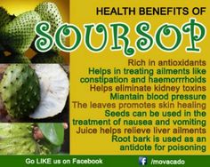 Image result for goodness of soursop fruit