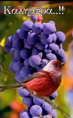 Bird Pictures, Nature Pictures, Pretty Birds, Beautiful Birds, Amazing Nature, Amazing Art, Fall Picnic, Tiny Bird, Kinds Of Birds