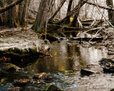 Alex Creek 2 by WilkiePhotography on Etsy