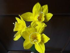 How to make paper flower - Daffodils / Narcissus - YouTube