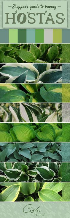 There are so many beautiful, easy-care hostas available. Get tips for selecting the best hostas for your yard, as well as tips for selecting the best hosta plants at your local garden center! - The Garden Center Outdoor Landscaping, Outdoor Plants, Front Yard Landscaping, Outdoor Gardens, Backyard Patio, Backyard Ideas, Small Gardens, Landscaping Ideas, Courtyard Landscaping