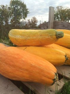 Canadian archaeology students on a dig in Wisconsin, USA dug up a pot containing… Squash Seeds, Dug Up, Squashes, Three Sisters, Modern History, Clay Pots, Horticulture, Year Old, Archaeology