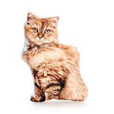 Selkirk Rex Cat Selkirk Rex Cat Pillow Cat Cushion Brown