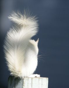 An albino squirrel, contemplating his uniqueness Photo by Shila Wilson