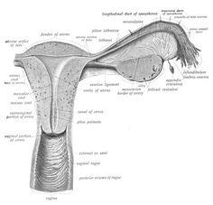 prostata wikipedia place