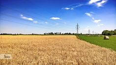 Wheatfield by Dávid Detkó on 500px | with Microsoft Lumia 640 XL #Microsoft #lumia #lumia640xl #shotonmylumia #wheat #field #500px