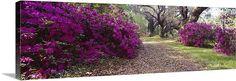Flowers in a garden, Magnolia Plantation and Gardens, Charleston, South Carolina