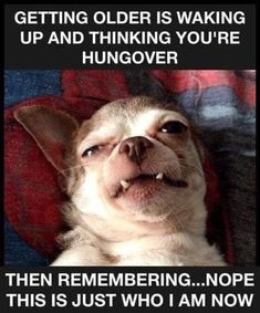 Getting Old Meme, Getting Older Humor, Aging Humor, Old Memes, Twisted Humor, Really Funny, Funny Photos, Funny Animals, Laughter