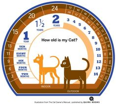 How old is my cat? (From MyLocalVet.ie)