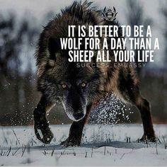 Wolf quotes, lion quotes, me quotes, motivational quotes for success, gre. Wisdom Quotes, True Quotes, Great Quotes, Words Quotes, Motivational Quotes, Inspirational Quotes, Sayings, Lone Wolf Quotes, Lion Quotes