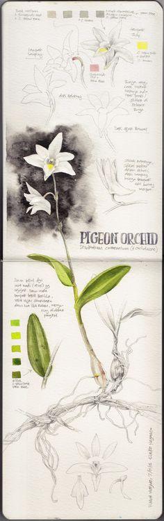 http://eunikenugroho.blogspot.co.uk/search/label/Botanical