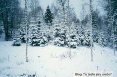 bosques da região de Jönköping - Suécia