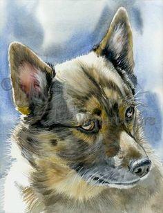 SWEDISH VALLHUND Dog Pet Portrait Watercolor Art Print by k9stein