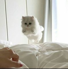 """Time to get out of bed, human!"""