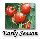 Tomatogrowers.com lots of different kinds of tomato varieties.