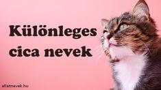 Különleges cica nevek A-Z lány és fiú cicáknak - Állatnevek Lany, Tarzan, Christmas Diy, Buddha, Movie Posters, Movies, Films, Film Poster, Popcorn Posters