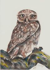 Orig ACEO Little Owl NFAC birds of prey nocturnal wildlife trading card sfa~ CT