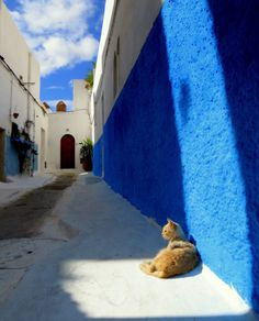 Streetcat.Rabat. (by straycatspotter)