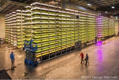 Photograph by George Steinmetz @geosteinmetz  They call it The Garden State, but who would suspect that an old industrial facility in Newark, New Jersey is home to the latest development in indoor agriculture. This was my fourth visit to AeroFarms, and these guys seem to have hit upon the magic formula for vertical farming, with racks of LED lights now growing arugula, spring mix, kale, and watercress.  The results are currently sold in my local supermarket as Dream Greens.  To see the key…