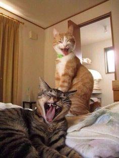 Ты моя подруга, мы с тобой друзья... Ты такая дура, прямо как и я! #catsandkittenshumor