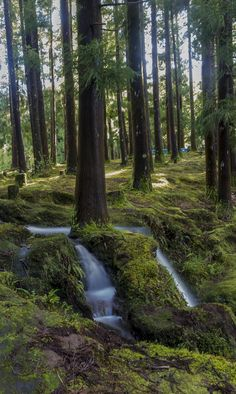 "Photo taken at ""Reserva Florestal de Recreio da Lagoa das Patas"". Ilha Terceira, azores, Portugal."