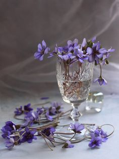 Violets in a crystal wine glass.