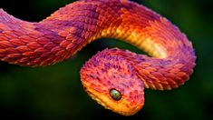 These Colorful Snakes Are Among The Most Beautiful Creatures On The Planet