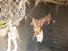 Carne seca (comida nómade)
