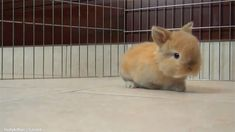 This tiny baby bunny who is just living and exploring life. | The 33 Most Important Bunny GIFs On The Internet