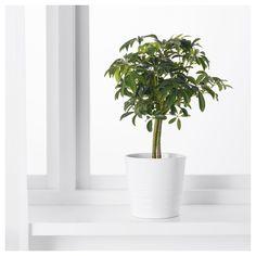 stoere meerpaal als sokkel of zuil onder een plant voor een authentieke look stoere sokkels en. Black Bedroom Furniture Sets. Home Design Ideas