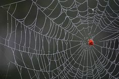 Spider Web Art Print by Christina Rollo. All prints are professionally printed, packaged, and shipped within 3 - 4 business days. Choose from multiple sizes and hundreds of frame and mat options. Canvas Art Prints, Framed Prints, Web Paint, Quality Photo Prints, Thing 1, Online Art, Fine Art America, Nature Photography