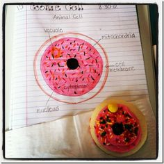 SC.6.L.14.4-Compare and contrast the structure and function of major organelles of plant and animal cells, including cell wall, cell membrane, nucleus, cytoplasm, chloroplasts, mitochondria, and vacuoles.--Creating an edible cell