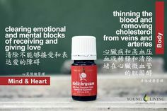 Helichrysum Young Living