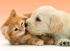 5 très bonnes raisons pour avoir un animal de compagnie !
