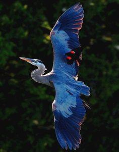 Inanely Beautiful Bird Nature