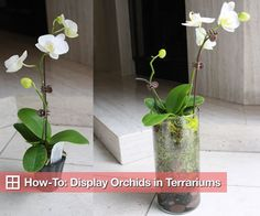 How to Plant Orchids in Glass Terrarium Vases