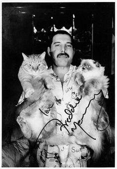 Freddie Mercury with Oscar and Tiffany. Mercury loved his cats so much that he reportedly spoke to them on the phone when he was on tour. Queen Freddie Mercury, Crazy Cat Lady, Crazy Cats, I Love Cats, Cool Cats, Freddie Mercuri, Rock And Roll, Patricia Highsmith, Celebrities With Cats