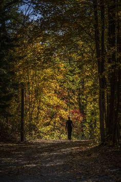 All happiness... - Parc de al Fatineau, Quebec, Canada, North America