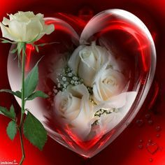 Imikimi Hearts and Roses | Hearts & Roses