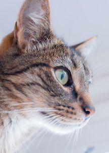 Murfy #fujifilmxt2 #cat #photography