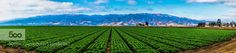 CENTRAL COAST FARMLAND - Pinned by Mak Khalaf THIS FARMLAND WAS BEAUTIFUL TO BEHOLD. THE FOOTHILLS ARE A PERFECT BACKDROP FOR THE VIBRANT COLORS OF THE CROPS. I THINK THE LINEAR PATTERN OF THE LAND REALLY MAKES THIS IMAGE INTERESTING. Landscapes CALIFORNIACENTRAL COASTCLOUDSFARMLANDFOOTHILLSNEAR MONTEREYPATTERNVERY COLORFULGREEN HUE by scott125
