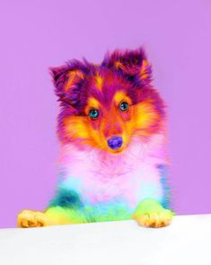 Ramzy Masri is a talented Brooklyn-based graphic designer who uses rainbow colors as a major inspiration for his artwork. Pretty Animals, Colorful Animals, Cute Little Animals, Cute Funny Animals, Animals Beautiful, Baby Animals Pictures, Cute Animal Pictures, Animals And Pets, Rainbow Dog